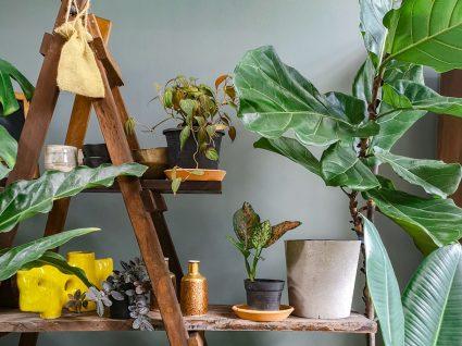 plantas dispostas num escadote de madeira