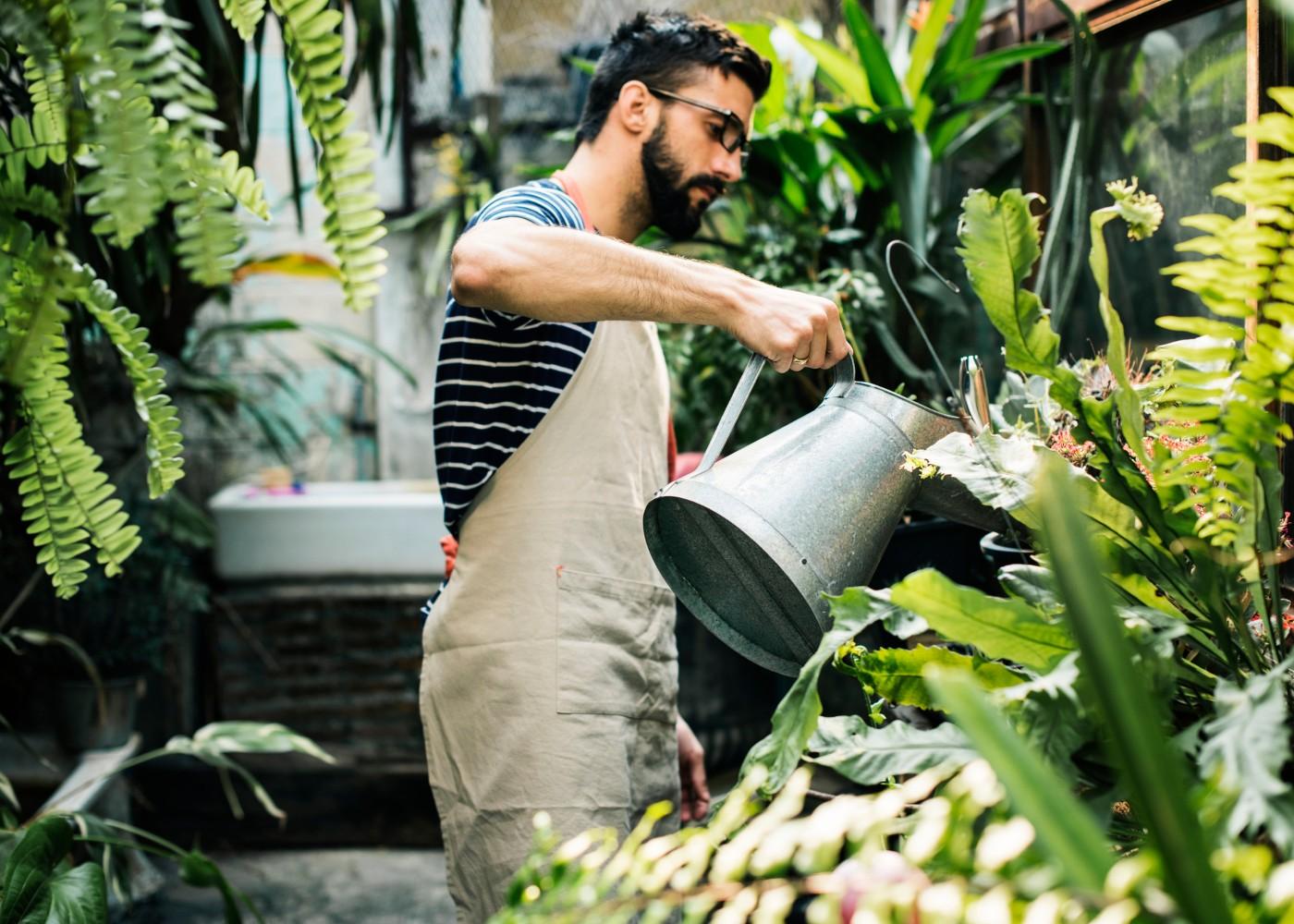 homem a regar plantas