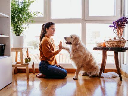 senhorio pode proibir animais em casa alugada