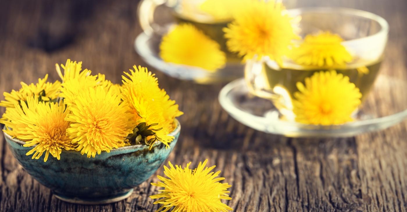 benefícios do chá dente de leão