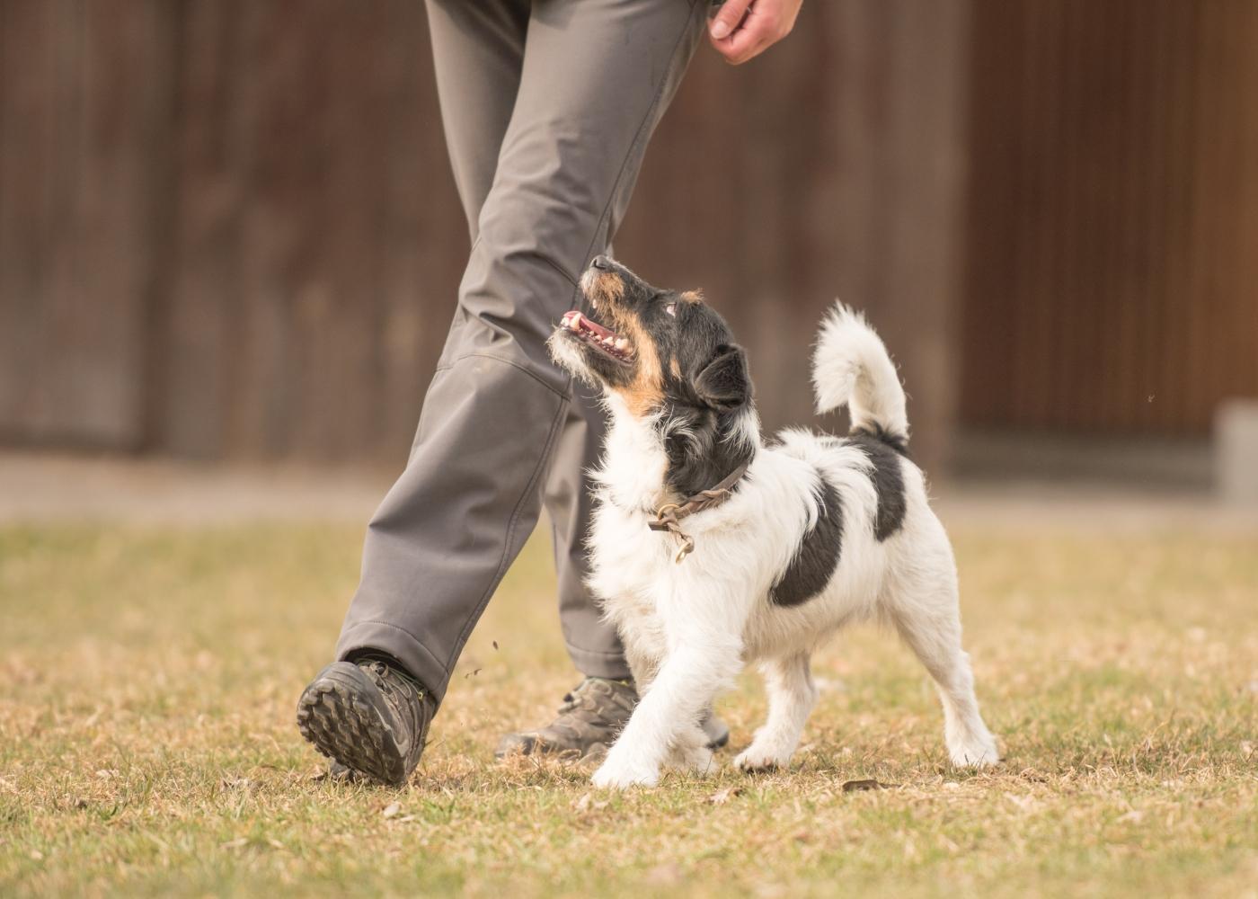 cão a andar a par do dono no parque