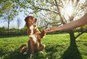 como ensinar um cão