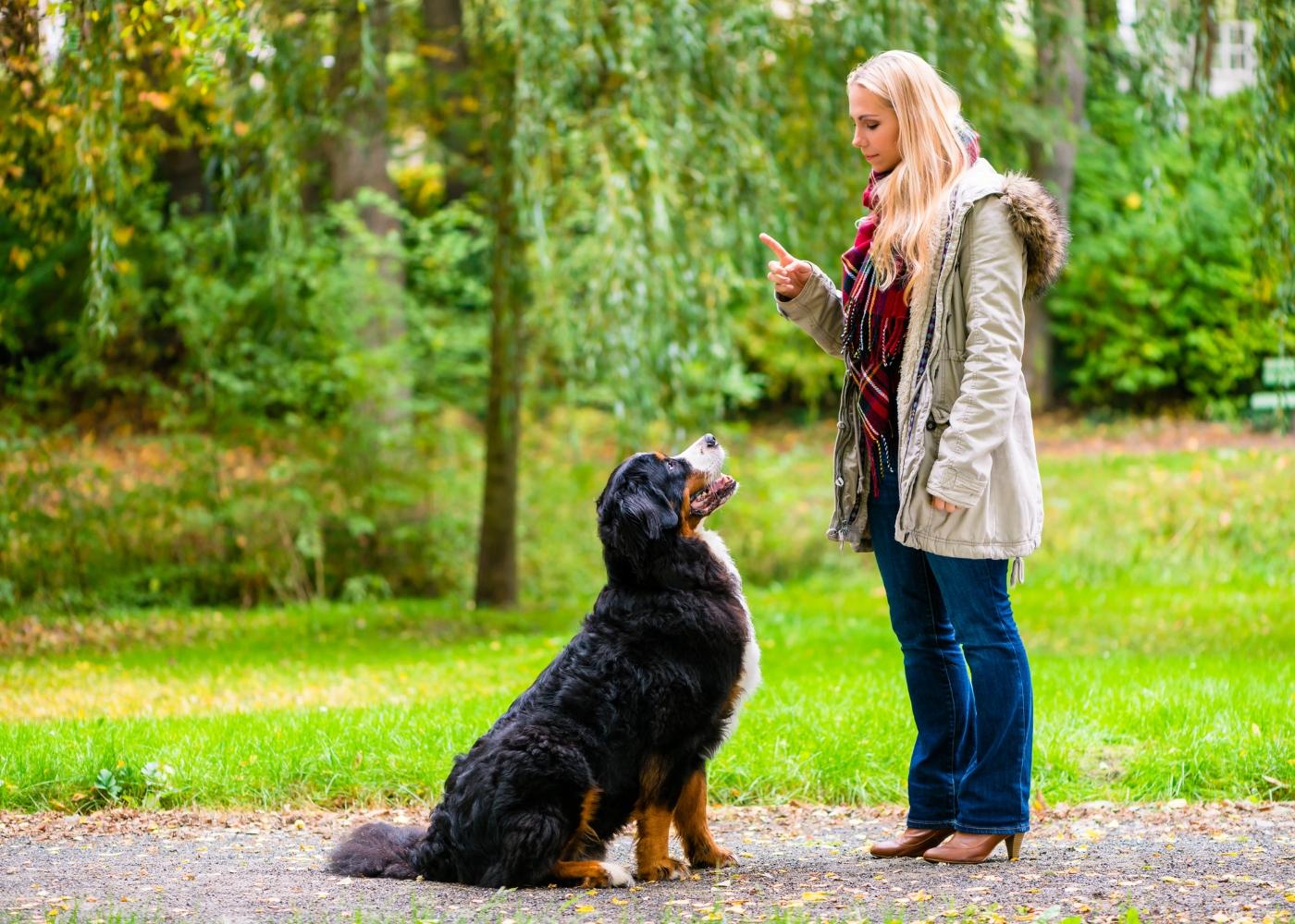 dona a ensinar o seu cão a sentar