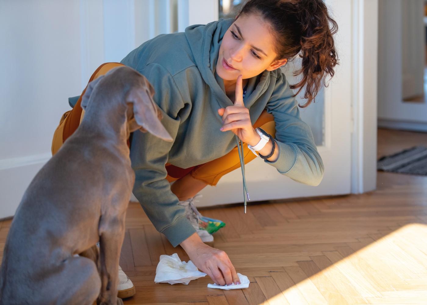 dona a ensinar cão a não fazer asneiras