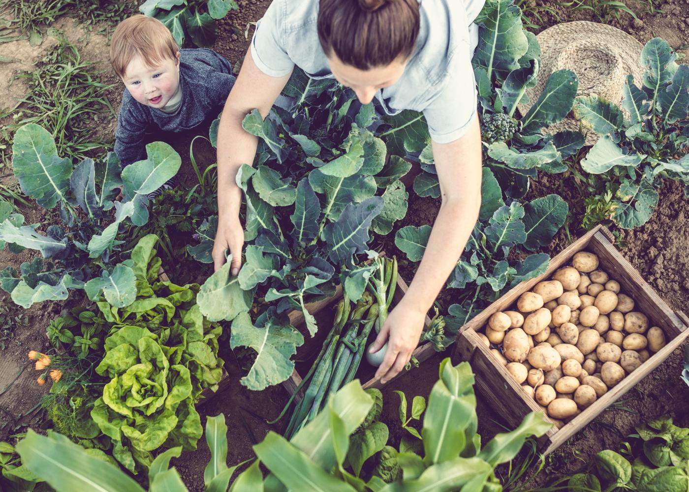 mãe a trabalhar na horta com filho