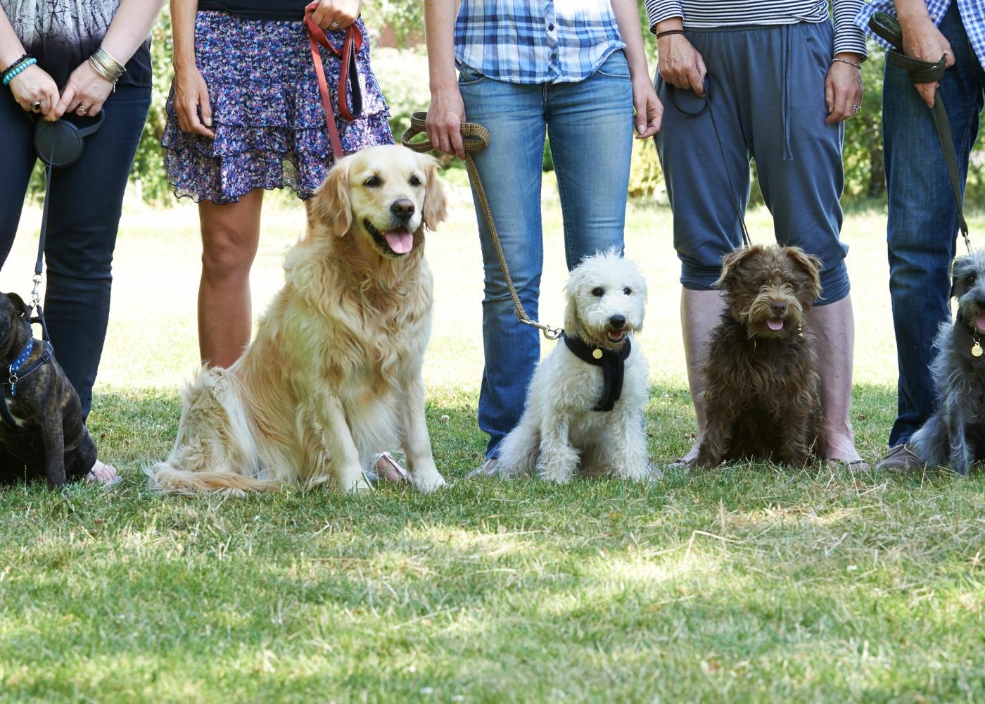 cães numa escola de treino