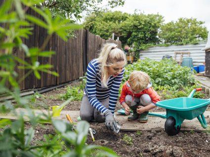 ideias baratas para fazer um jardim