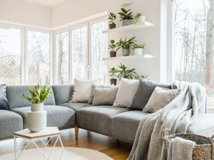 sala de estar decorada com plantas