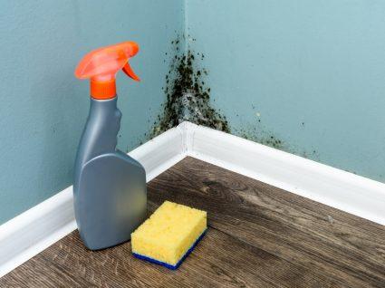 Como limpar bolor das paredes