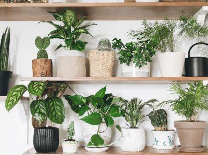 prateleiras de casa com plantas de interior que purificam o ar
