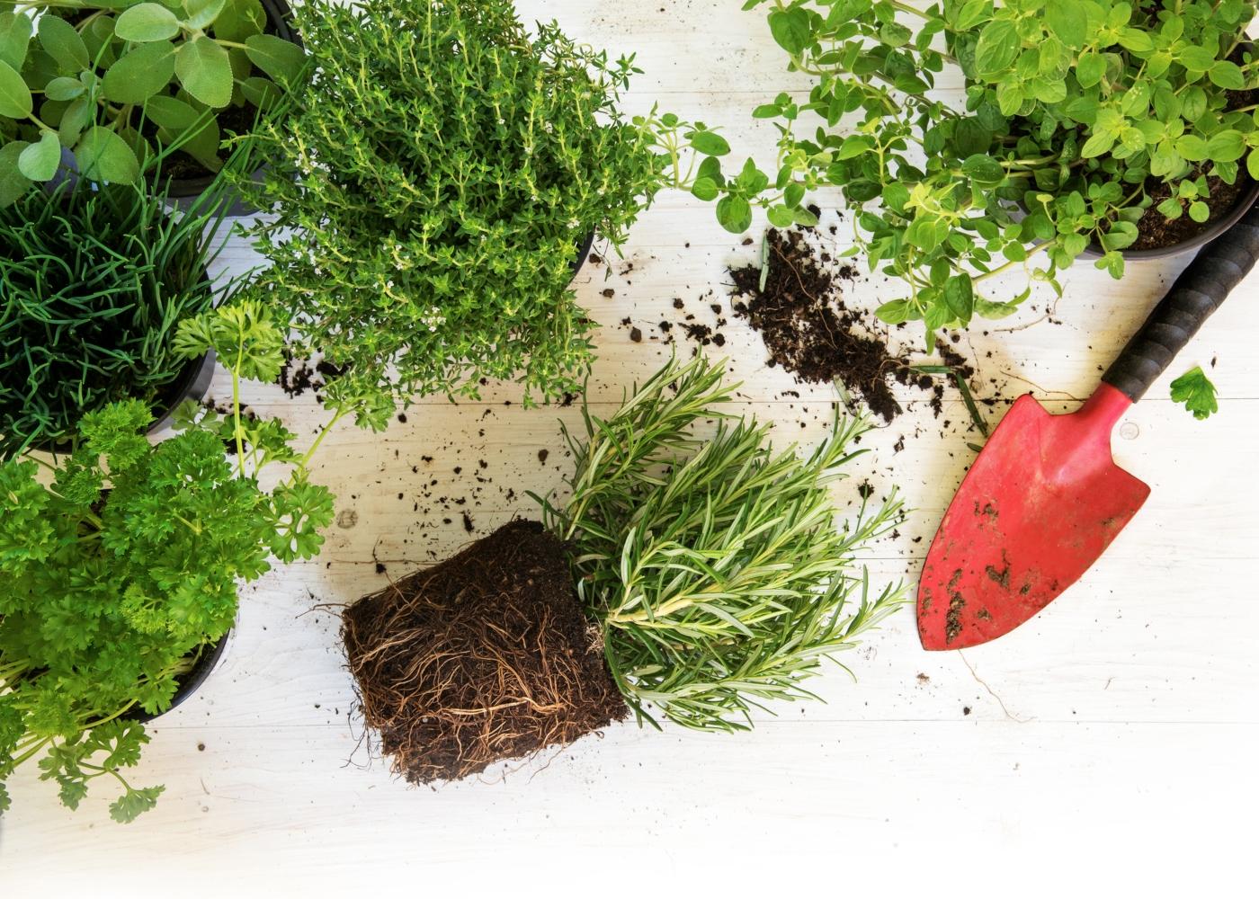 plantas a serem mudadas de vaso