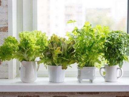 horta em apartamento plantada em vasos
