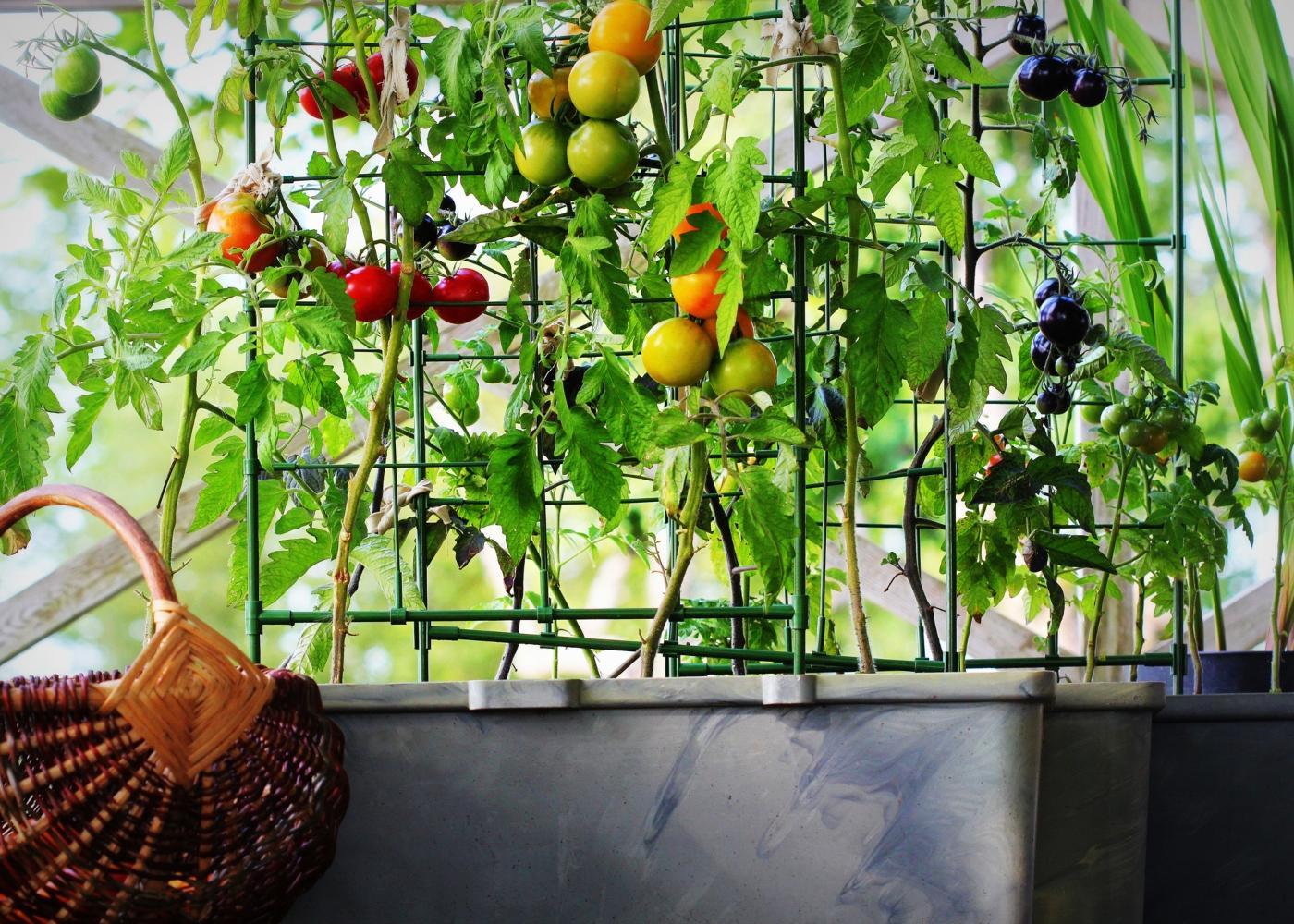 horta vertical em varanda de apartamento