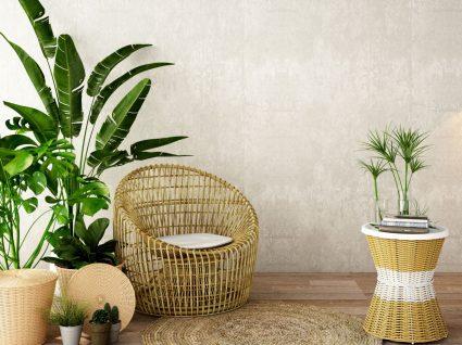plantas-ornamentais-faceis-de-cuidar