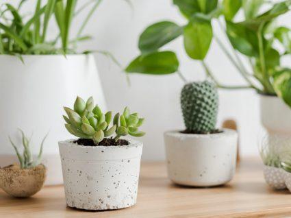 vasos com plantas suculentas