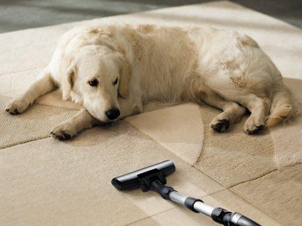 Limpeza com animais em casa