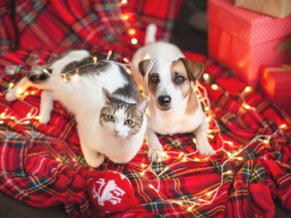 Cão e gato no natal