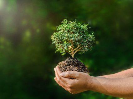 mãos a segurar um bonsai