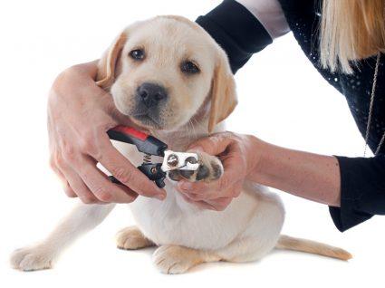 cortar as unhas do cão ou do gato