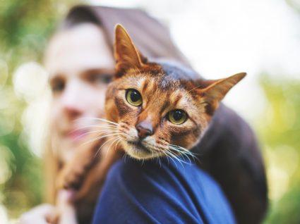 Problemas de diabetes nos gatos