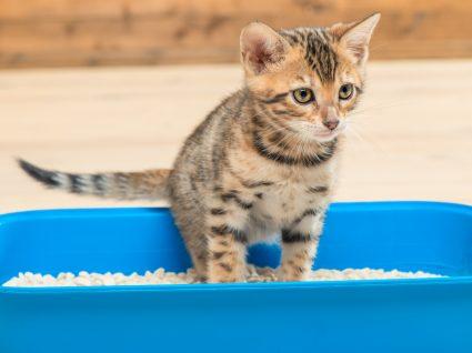 Escolher a melhor areia para gatos