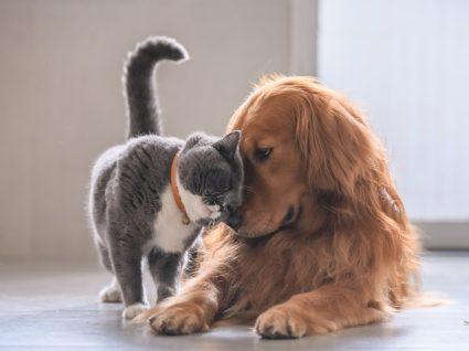 Cão e gato em brincadeira
