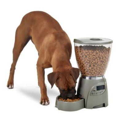 comedouro automático para cães de porte grande