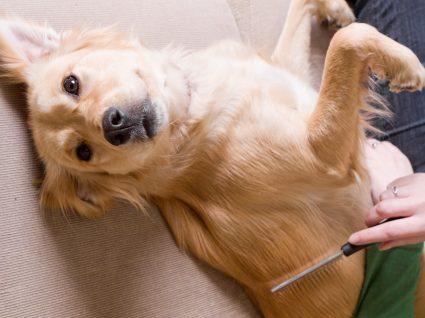 Dicas para eliminar pelos dos cães