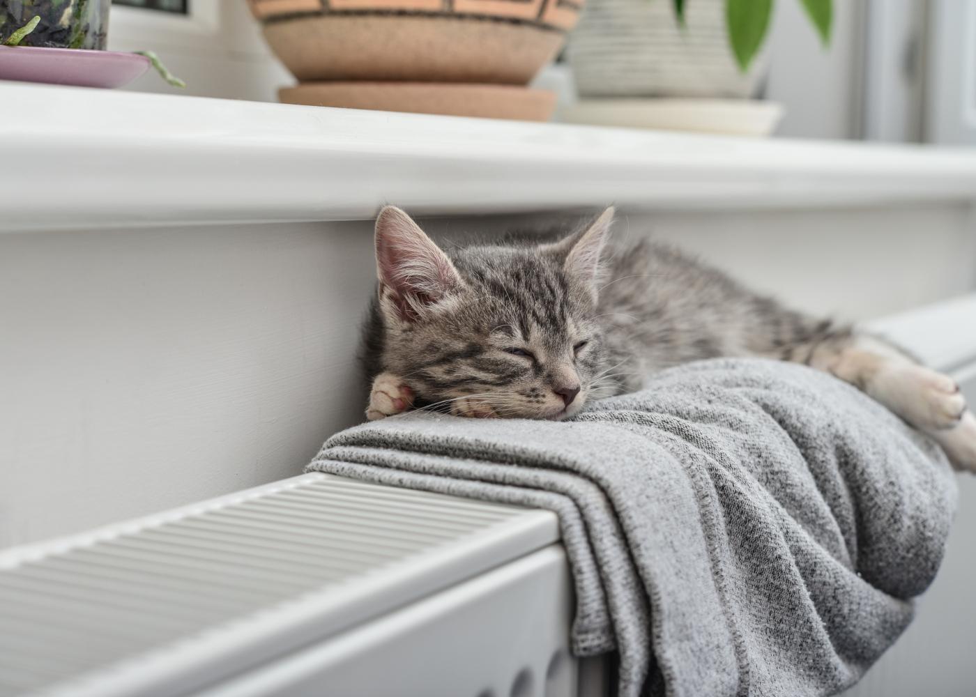 gato a dormir no aquecimento central