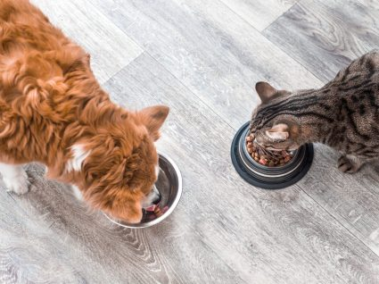 Alimentação húmida ou seca para animais