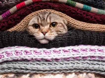 Gato com frio agasalhado