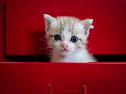 Dicas para treino de gatos