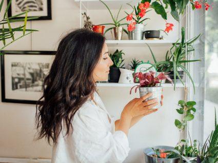 segredos de quem sabe cuidar das plantas