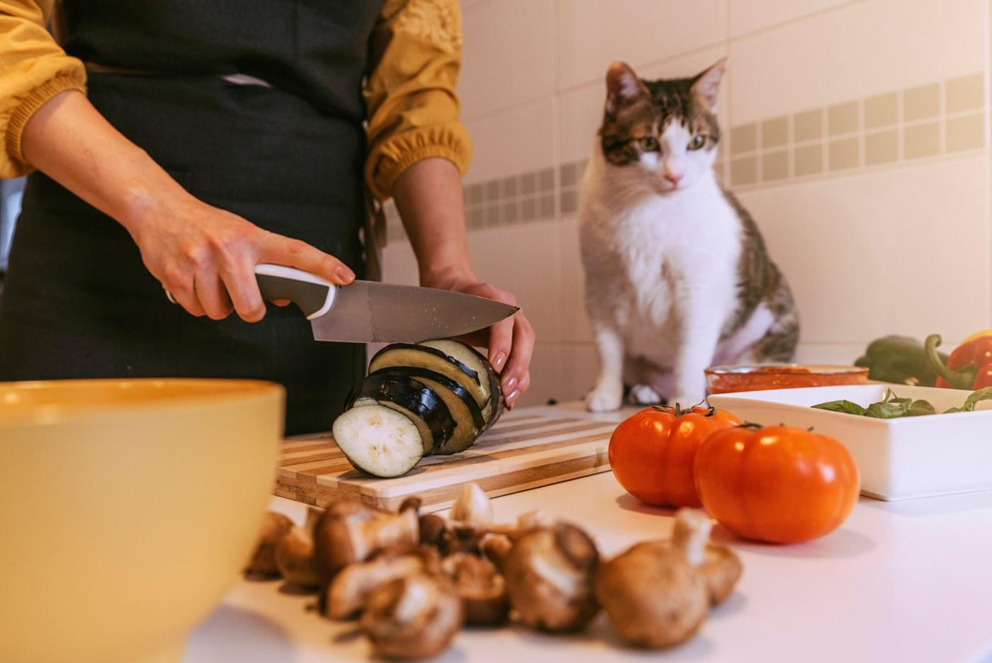 Mulher a cozinhar para o seu gato