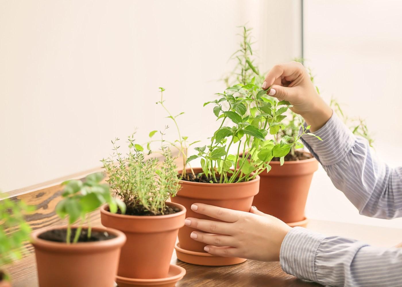 vegetais perenes são saudáveis
