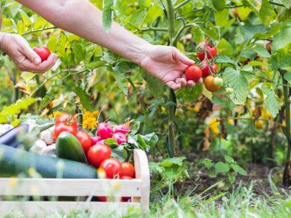 o que cultivar na horta