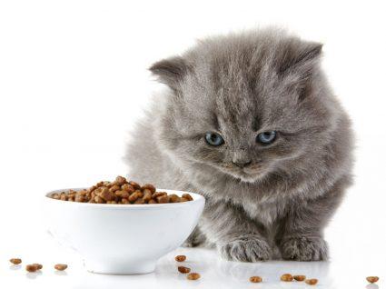 problemas quando o gato não come