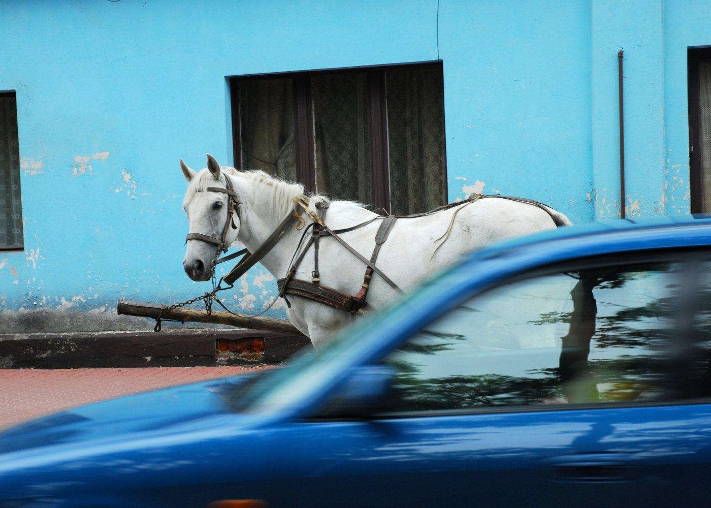 carro e cavalo