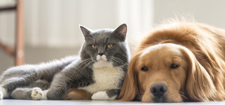 gato e cao deitados