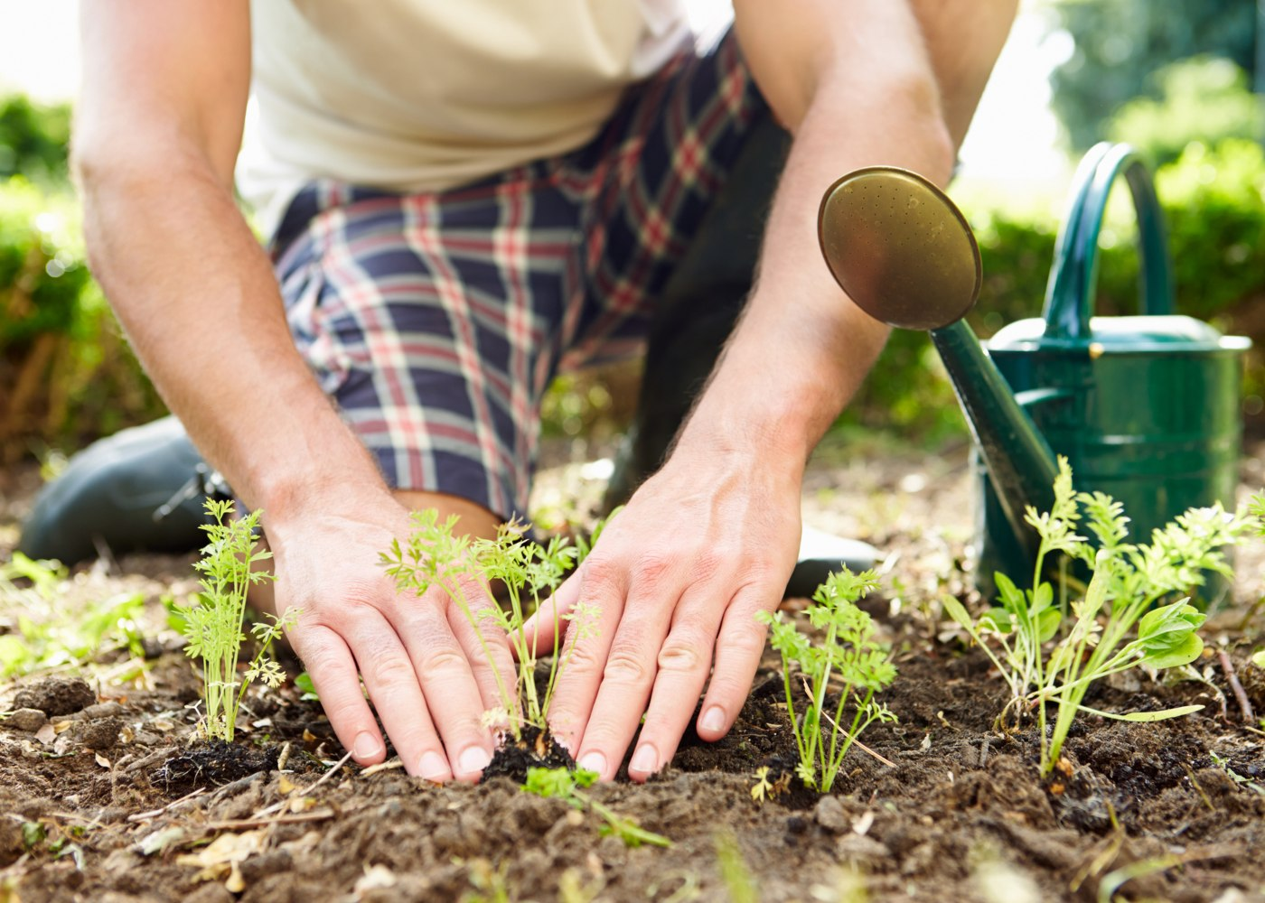 pessoa a cultivar uma horta em casa