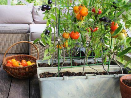 horta em casa
