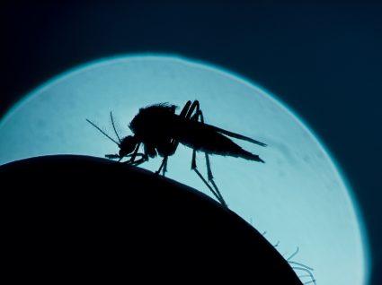 Picadas de mosquito no verão