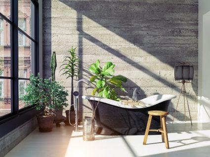 plantas decoração de casa de banho