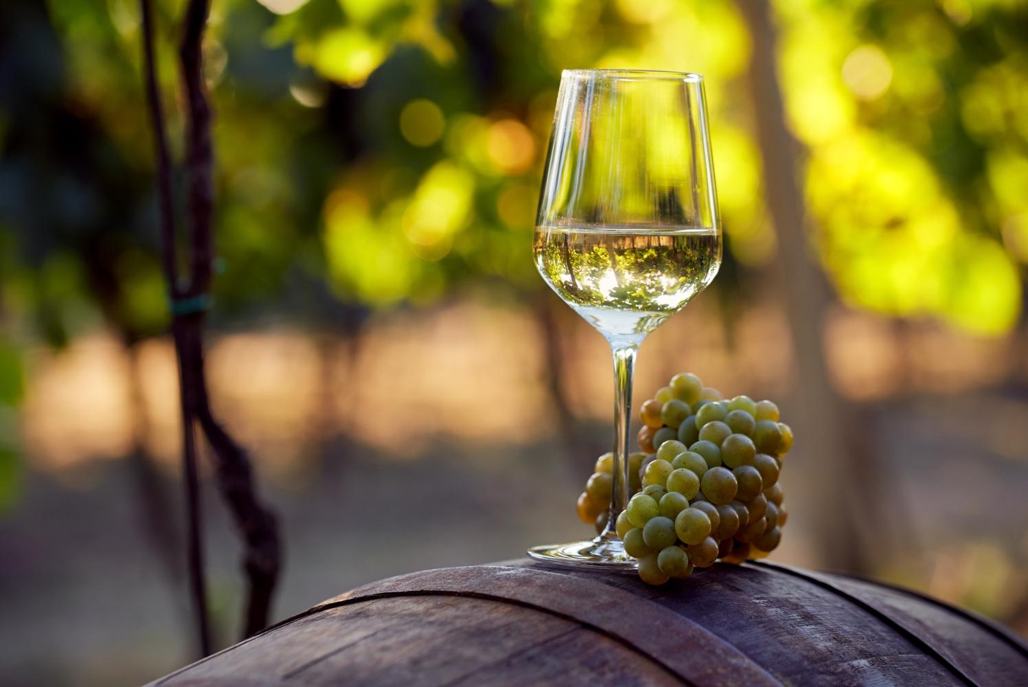 Amostra de vinhos verde