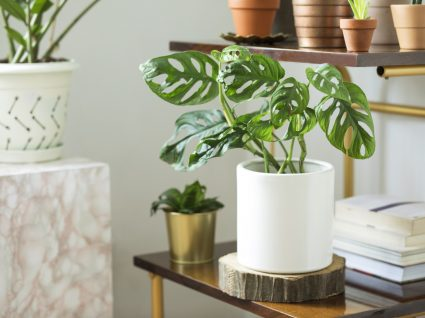 vaso com plantas numa mesa de apoio
