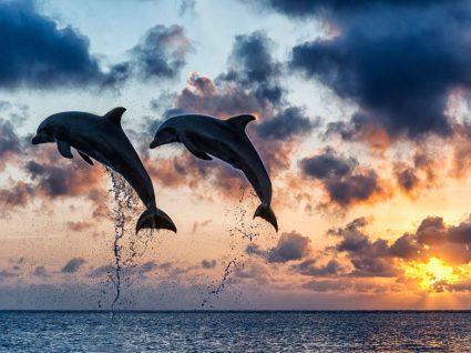 Passeios para ver golfinhos em Portugal