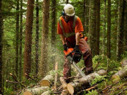 A limpeza de terrenos é obrigatória? Saiba o que diz a lei