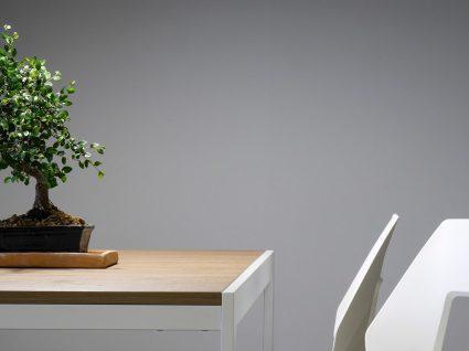 Como cuidar de um bonsai: 6 aspetos que deve mesmo ter em conta