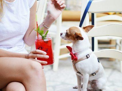Restaurantes já podem receber animais, mas maioria não vai aderir