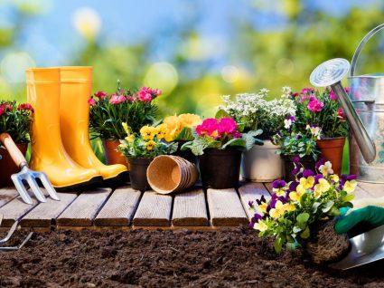 10 flores de jardim que vão encher de cor e aroma o seu canteiro
